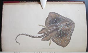 The Natural History of British Fishes, Including Scientific and General Descriptions of the Most ...