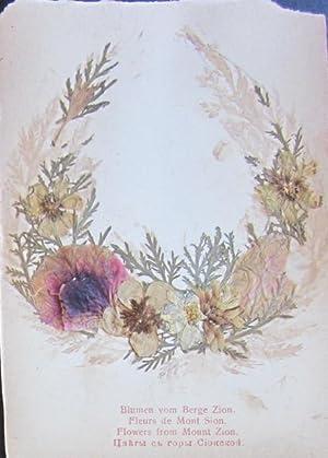 Blumen und Ansichten aus dem Heiligen Lande: floral specimens]