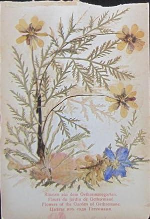 Blumen und Ansichten aus dem Heiligen Lande / Fleurs et Vues de la Terre Sainte / Flowers...