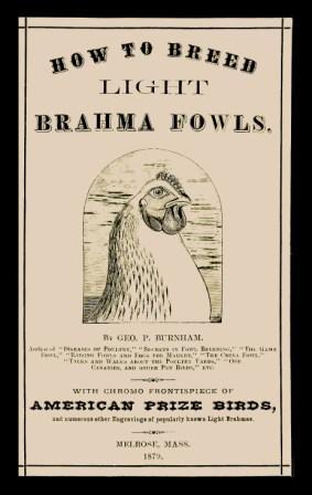 How to Breed Light Brahma Fowls: Geo. P. Burnham