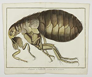 Giant flea [from the Encyclopédie ou Dictionnaire: Diderot, D. and