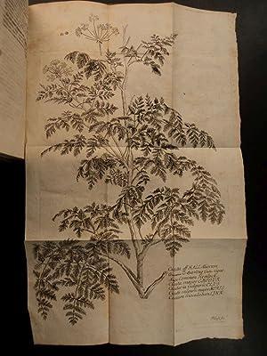 1761 1st ed Antonii Storck HERBAL Medicine Hemlock Poisons Cicuta Botany Plants: Antonii Storck