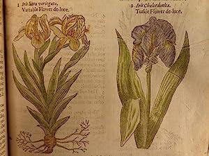 1597 1st John Gerarde Herball Plants English Herbal Illustrated Stirpium Botany: John Gerarde