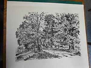 Lindenallee<. Original- Lithographie aus dem Jahre 1927, am unteren Bildrand handschriftlich ...