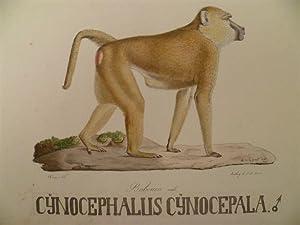 Histoire naturelle des mammifères, avec des figures: Saint-Hilaire, G. und