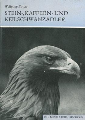 Stein-, Kaffern- und Keilschwanzadler Aquila chrysaetos, Aquila: Fischer, Wolfgang