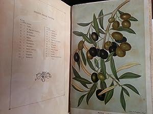 CULTURA (LA) DELL'OLIVO IN ITALIA - NOTIZIE STORICHE SCIENTIFICHE AGARARIE E INDUSTRIALI: ...