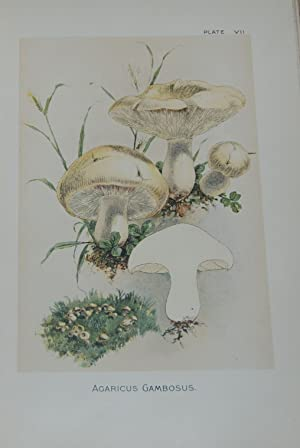 OUR EDIBLE TOADSTOOLS AND MUSHROOMS and how to distinguish them; A selection of thirty native food ...