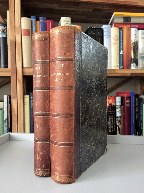 anatomischer atlas - ZVAB