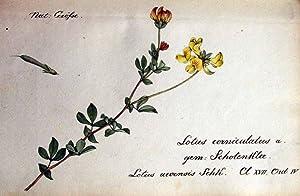 Sammlung von Schweizer Pflanzen. nach der Natur: HEGETSCHWEILER, Dr. Joh.