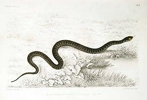 Histoire naturelle des reptiles et des batraciens.: FATIO, Victor (1838-1906)