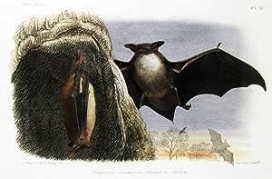 Histoire naturelle des mammifères. ?Faune des vertébrés: FATIO, Victor (1838-1906)