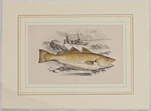 WHITING,: Jonathan Couch