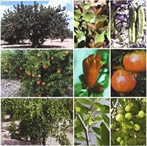Tratado de fruticultura para zonas áridas y: Melgarejo Moreno, P.Salazar,