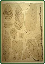 Report of the United States Geological Survey of the territories.: Hayden, Ferdinand Vandeveer.
