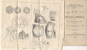 SPUGNE E CORALLI. Lettura tenuta nel Regio Museo di Storia Naturale in Firenze il 17 marzo 1870.: ...
