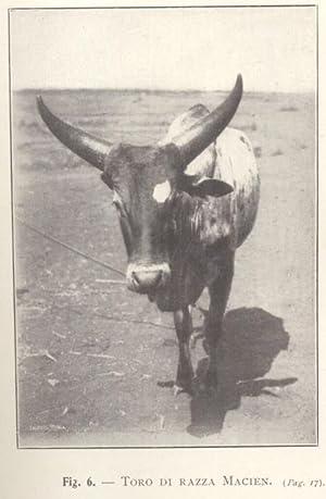 L'IMPRESA ZOOTECNICA NELLA SOMALIA ITALIANA MERIDIONALE.: SCASSELLATI SFORZOLINI Giuseppe.