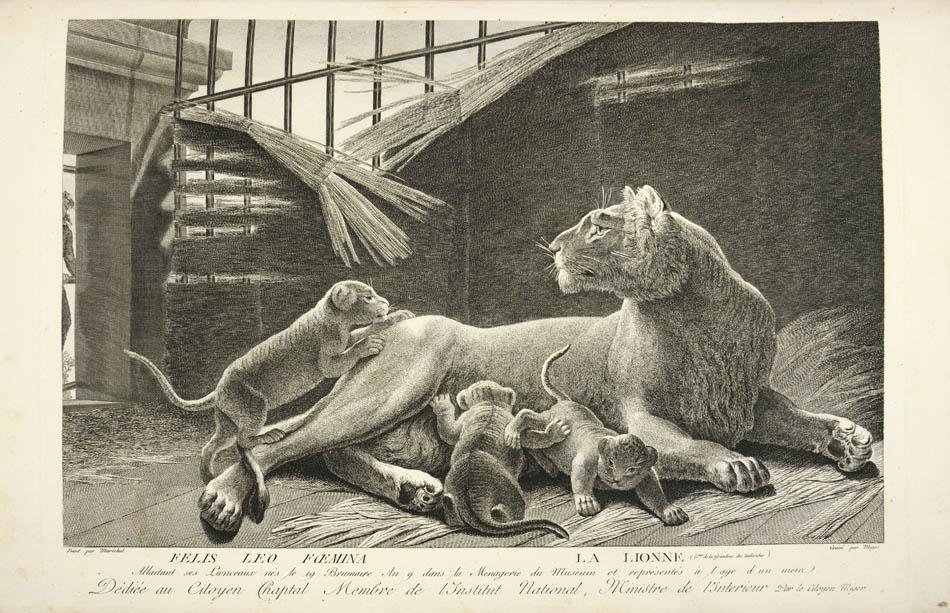La m nagerie du mus um national d 39 histoire naturelle ou les animaux vivants peints d 39 apres - Animaux du jardin des plantes ...
