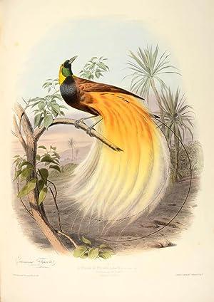 Les oiseaux les plus remarquables par leurs: TRAVIÈS, Édouard.