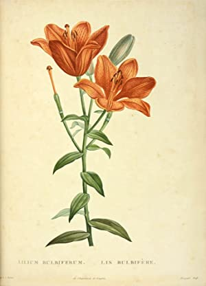 La Botanique.: REDOUTÉ, Pierre-Joseph (illustrator)