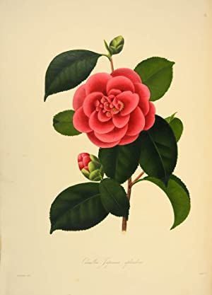 Illustrations and descriptions of the plants which: CHANDLER, Alfred; William