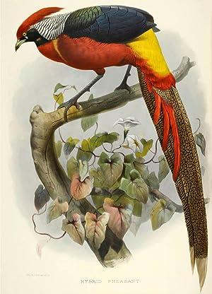 A monograph of the phasianidae or family: ELLIOT, Daniel Giraud.