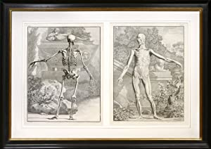 Pair of Anatomical studies]: ALBINUS, B[ernard] S[iegfried]