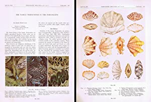 The Family Tridacnidae in the Indo-Pacific; In: ROSEWATER, J.,