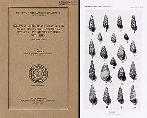 Molluscan intermediate hosts of the asiatic blood: Bartsch P.,