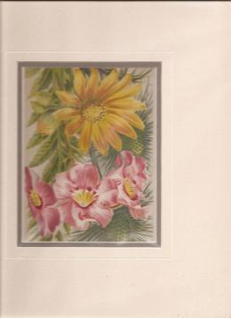 Print -Flowers]: Eryngium Amethystinum. Incarvillea Delavayi. Senecio Clivorum.