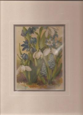 Print -Flowers]: Scilla Sibirica Multiflora. Galanthus Nivalis. Chionodoxa Luciliae. Hyacinthus ...