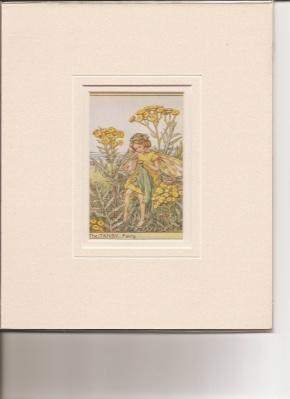 Print] The Tansy Fairy.: Barker, Cicely Mary.