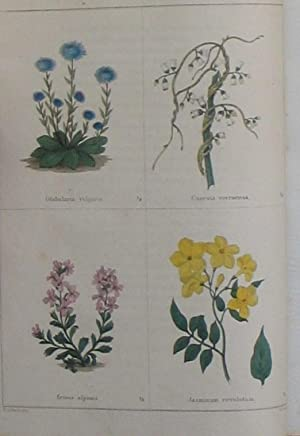 The Botanic Garden; consisting of highly finished representations of Hardy Ornamental Plants, ...