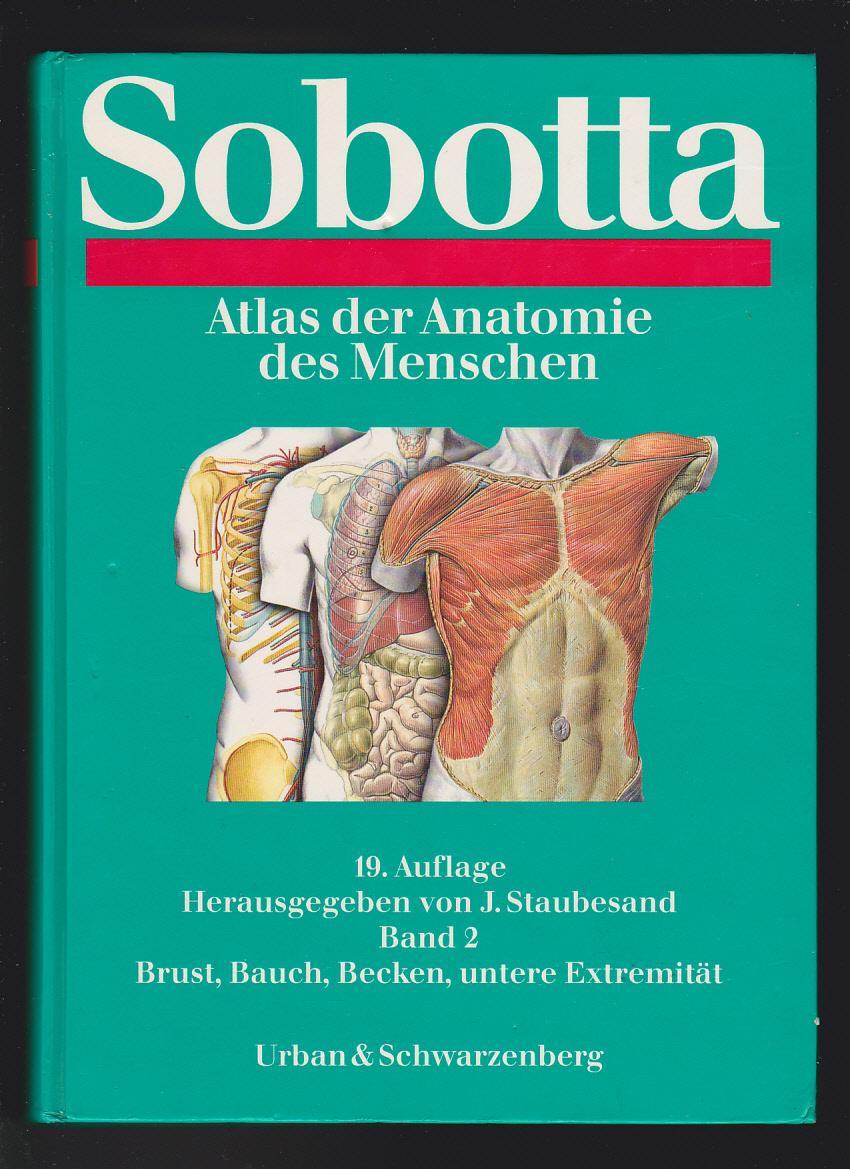 Fantastisch Weibliche Anatomie Des Menschen Bauch Bilder ...