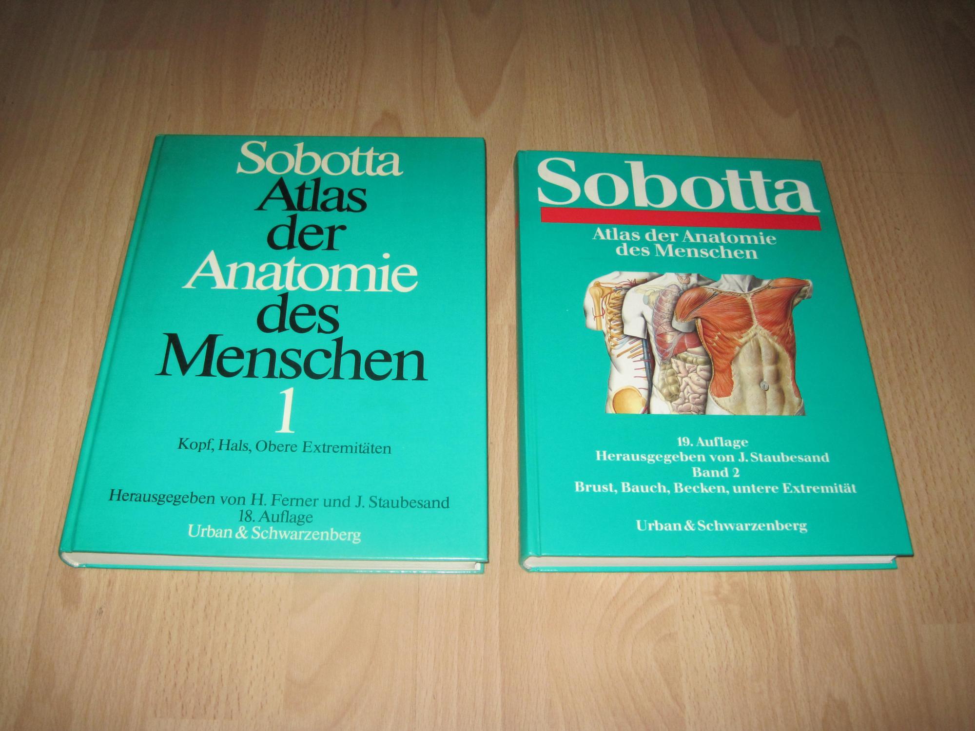 Charmant Untere Extremität Anatomie Notizen Zeitgenössisch ...