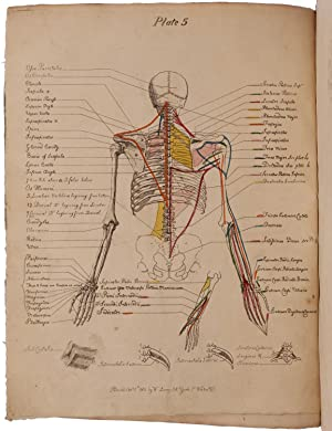 A Description of the Muscles of the Human Body, as they appear on Dissection; with the Synonyma o...