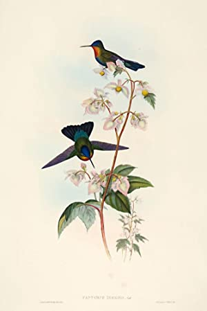 Costa Rican Humming-Bird: John Gould and H.C. Richter