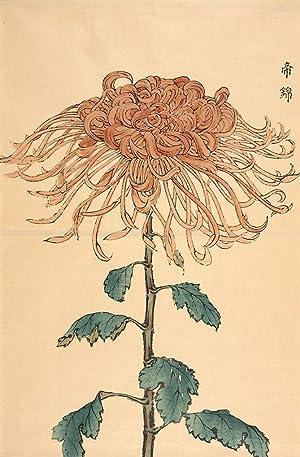 Large Chrysanthemum: Keika Hasegawa (active