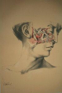 Illustrations of dissections in a series of: ELLIS (George Viner),