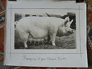 """Banquise"""". 1er prix - Champion, Paris 1931."""