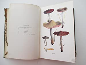 British Fungi with a chapter on Lichens.