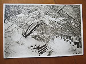 Original Photograph- Footpath With Bench, Fence And Trees Covered With Snow