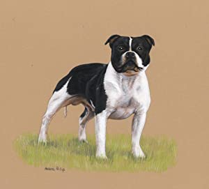 Melanie Phillips - Superb Contemporary Gouache, Staffordshire Bull Terrier
