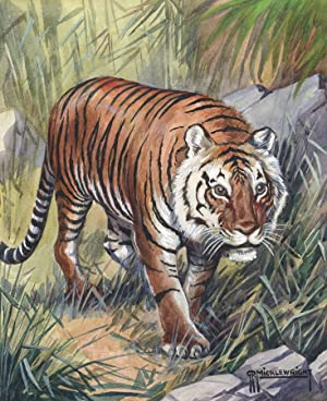 G. P. Micklewright - Signed Early 20th Century Watercolour, Tiger in the Grass