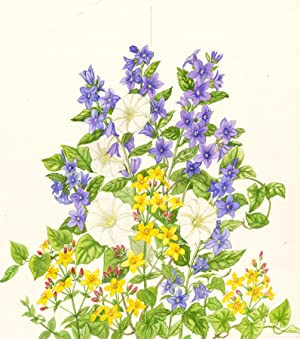 D. Bovey - Contemporary Watercolour, Floral Greeting: D. Bovey