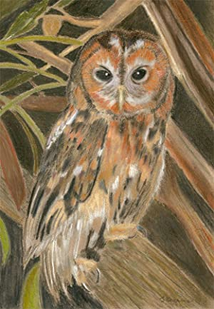 Signed Mid 20th Century Pastel - Owl on a Branch