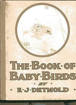 THE BOOK OF BABY BIRDS: Detmold, E J