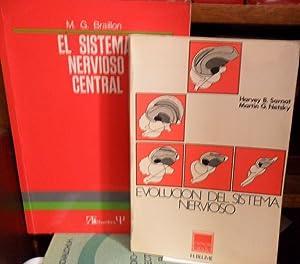 EL SISTEMA NERVIOSO CENTRAL + EVOLUCIÓN DEL: M. G. BRAILLON