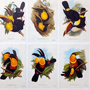 John Gould. The Family of Toucans: Jonathan Elphick - 51 STUNNING PRINTS SEALED IN A CASE!