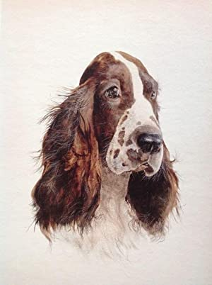 Spaniel: PETER KETTLE - Limited Edition Giclee Print